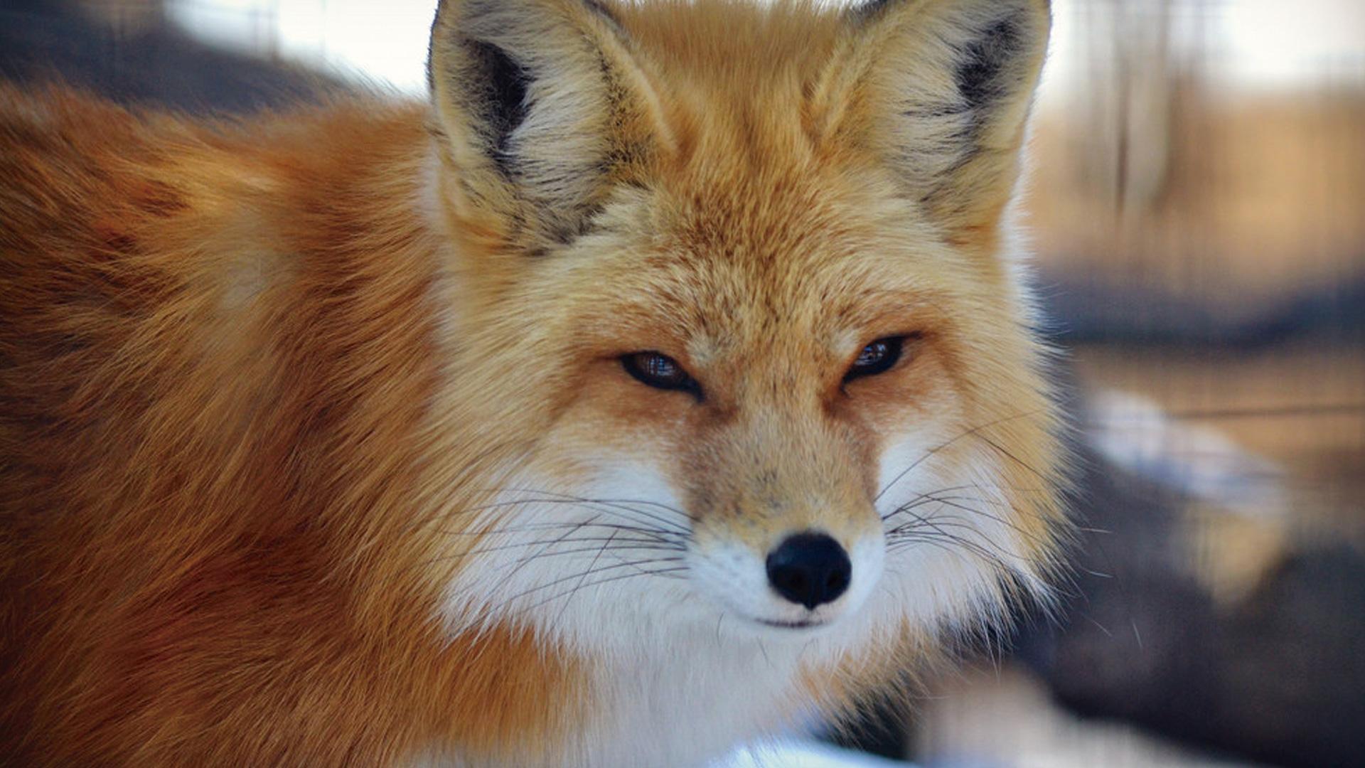 vila-das-raposas